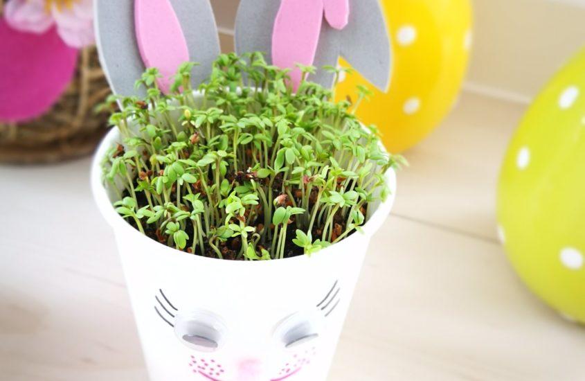 Spring in the Cup to Go –  Ein kleiner Frühlingsgruß im Becher